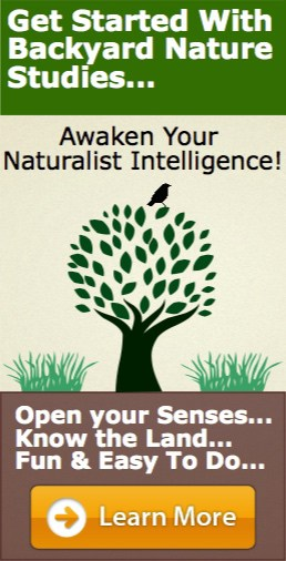 Awaken Your Naturalist Intelligence Course