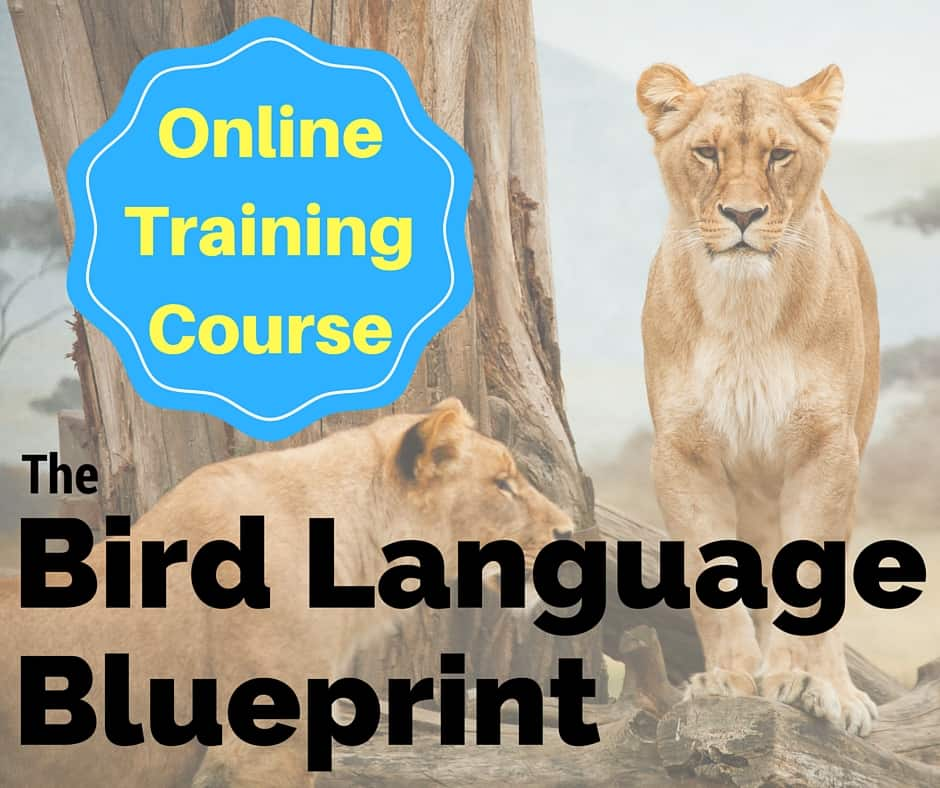 Video #4 – Five Steps For Going Deep Into ​The  ​World of Bird Language