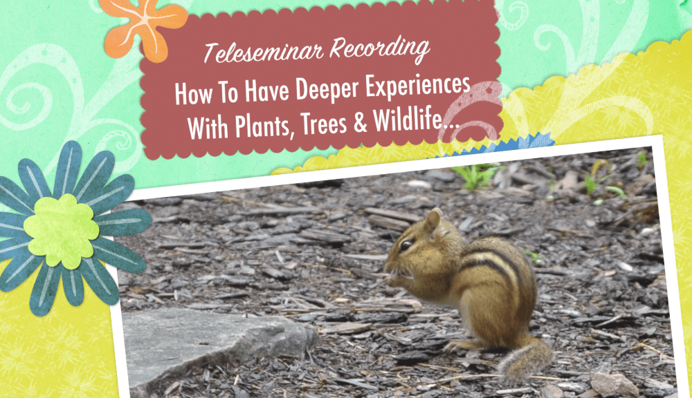 How To Have Deeper Experiences With Plants, Trees, Birds And Other Wildlife