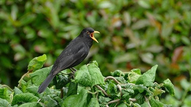 Bird Language Stories
