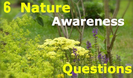 6 Excellent Nature Awareness Questions To Ask Outside