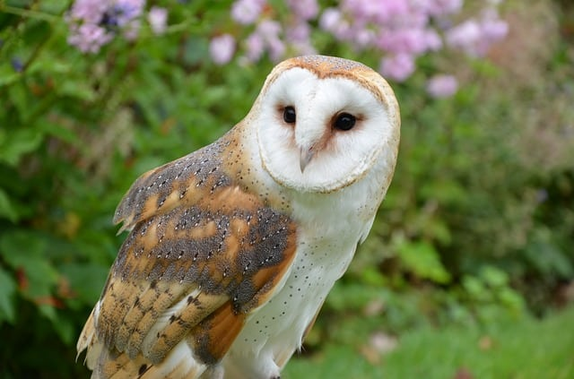 How To Find An Owl By Listening To Bird Language