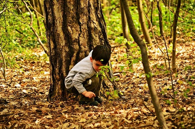 Child looking intently towards the forest floor