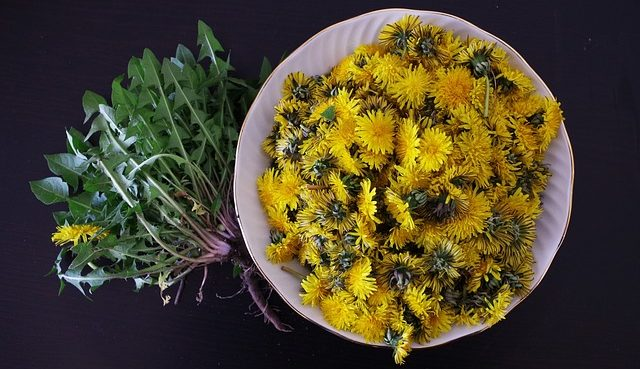 What Can Dandelions Be Used For?