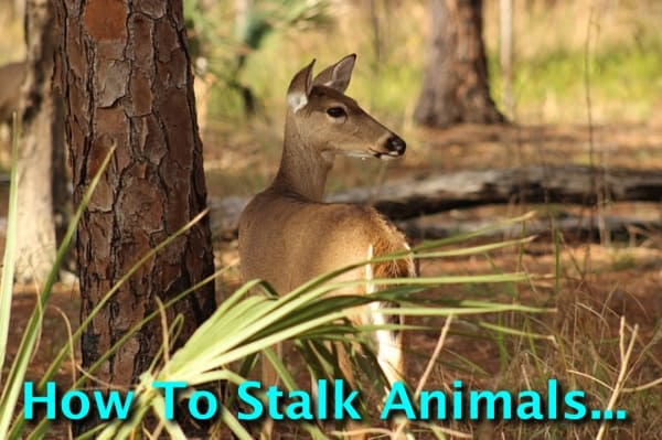 How To Stalk Animals (And Not Get Caught!)