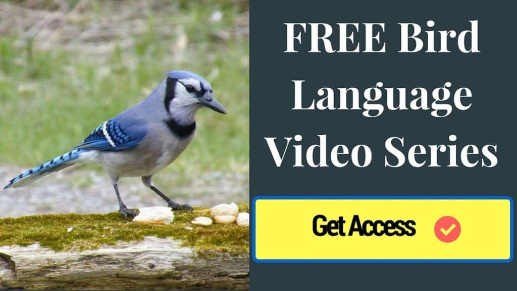 Bird Language Video Series