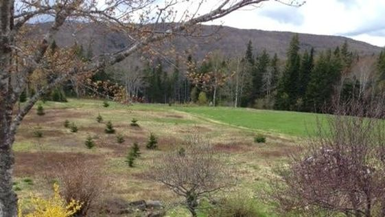 Permaculture Design By Observation