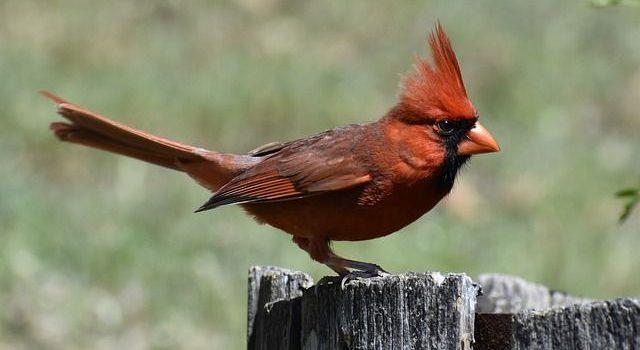 The Lost Art Of Bird Language