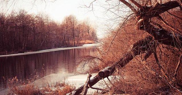 Nature Meditation & Mindfulness Live Call