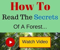How To Read The Secrets of a Forest