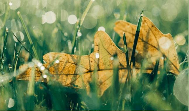 Oak Leaf Lawn