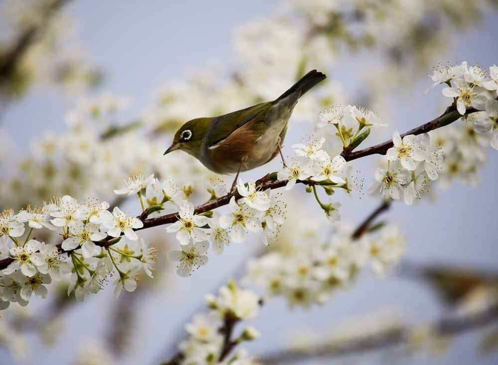 Rose Tree Blossom Bird
