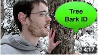 Tree Bark Identification
