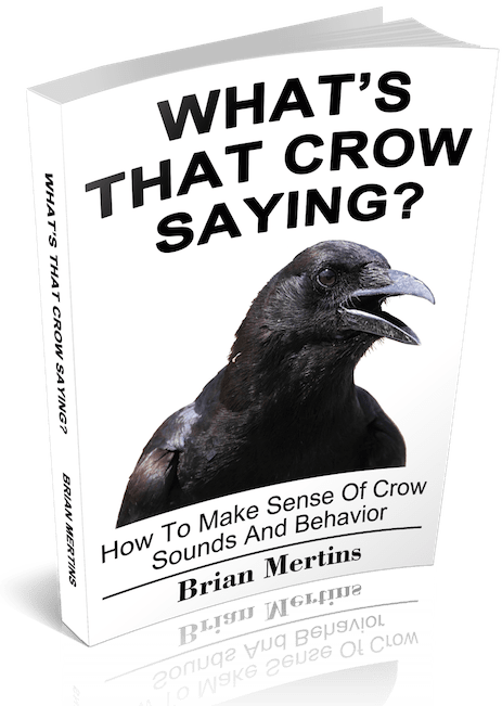 What's That Crow Saying?