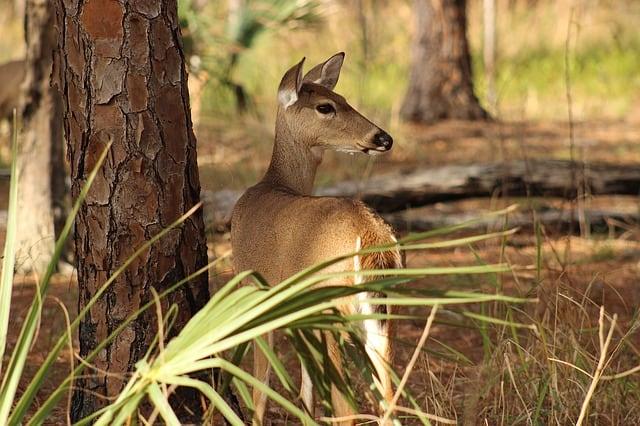 deer awareness