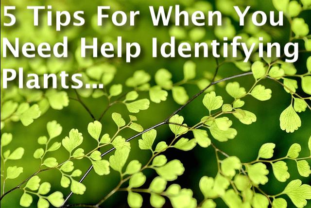 Identifying Plants Tips