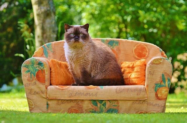 sofa cat