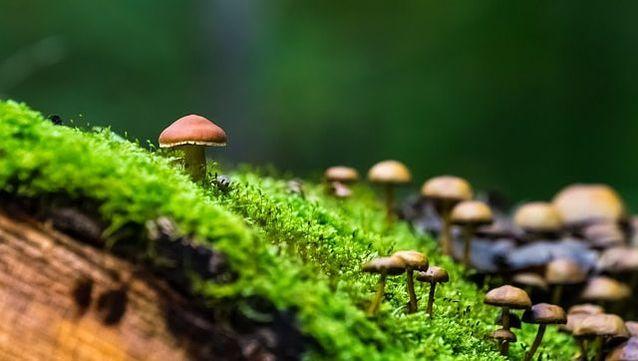 Mushroom Log