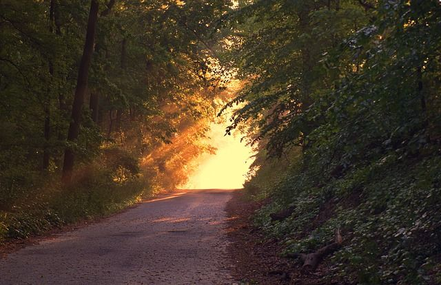 The Nature Awareness Journey