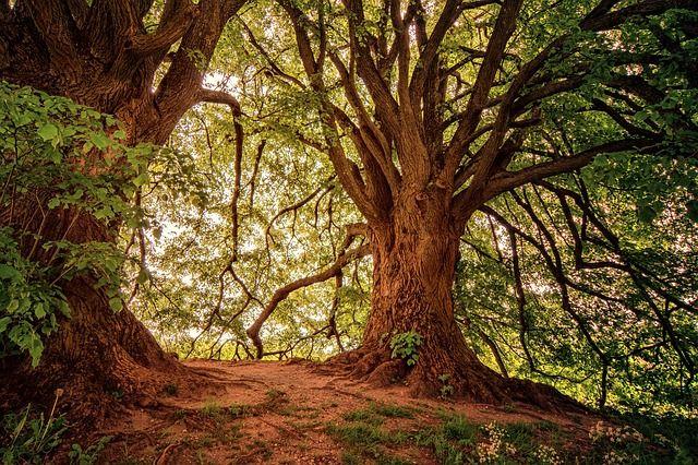 Naturalist Tree