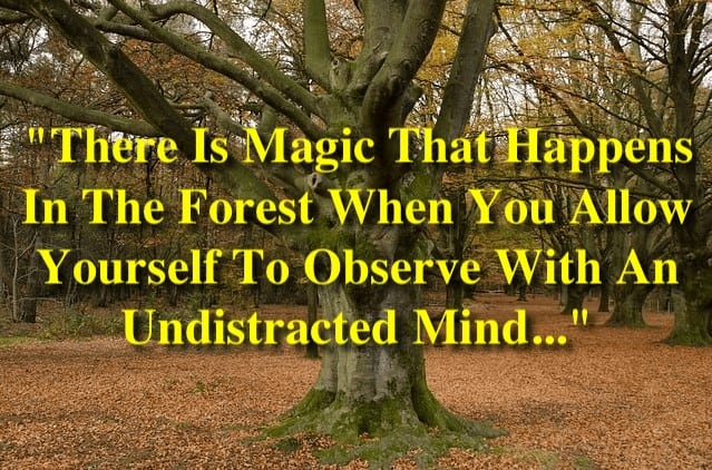"""""""There Is Magic That Happens In The Forest When You Allow Yourself To Observe With An Undistracted Mind..."""""""
