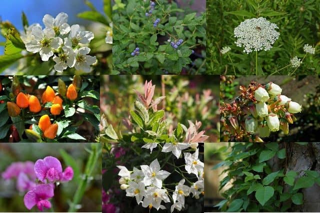 14 Types Of Plants Everyone Should Know Photos Id Uses
